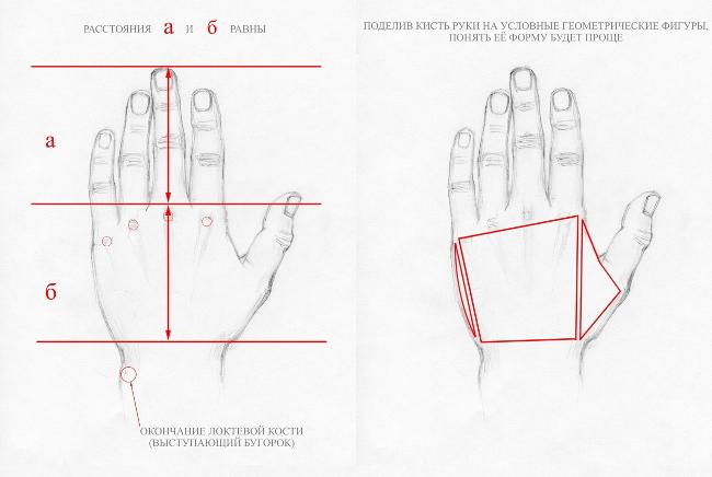 Как рисовать кисть руки? Анатомия для художника