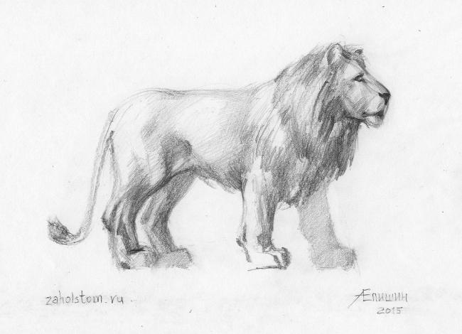 Рисунок льва. Бумага, карандаш. Художник Алексей Епишин