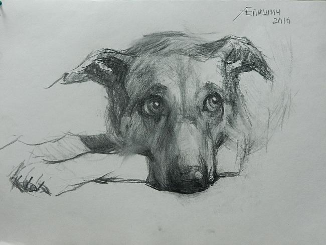 000 Взгляд молчаливого пса. Рисунок углем