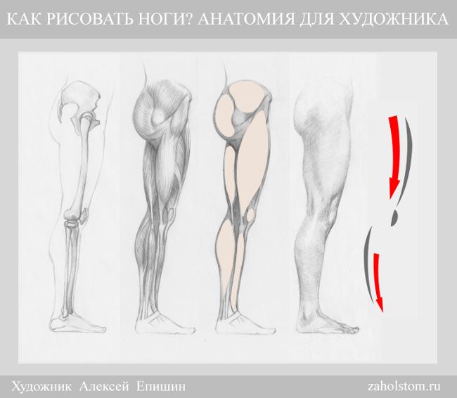 000 Как рисовать ноги_Анатомия для художника