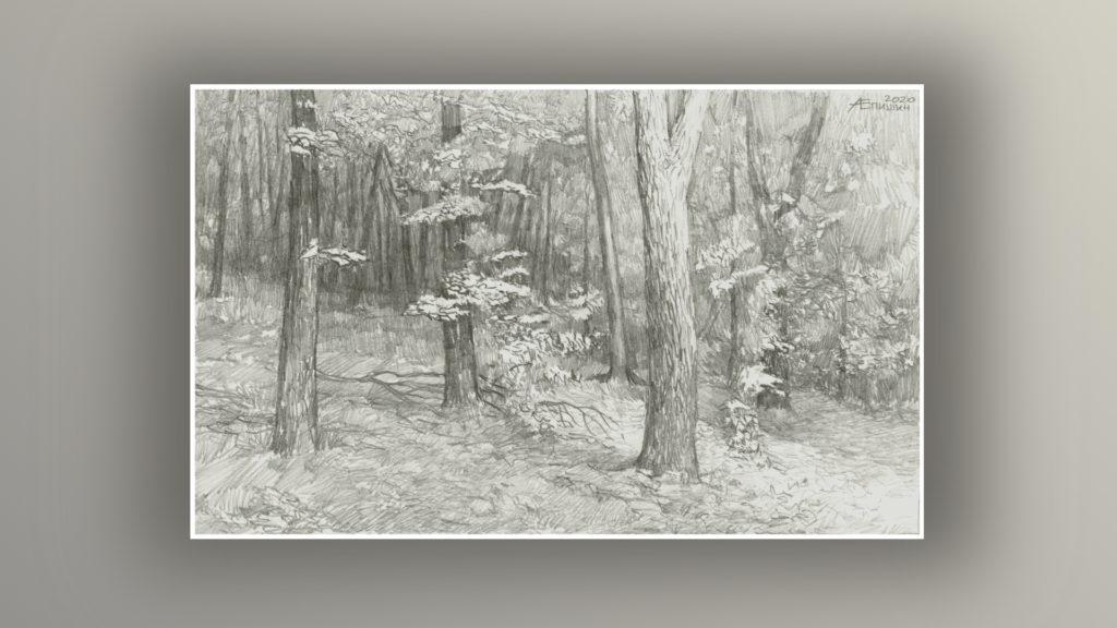 000 Рисунок карандашом_В лесу