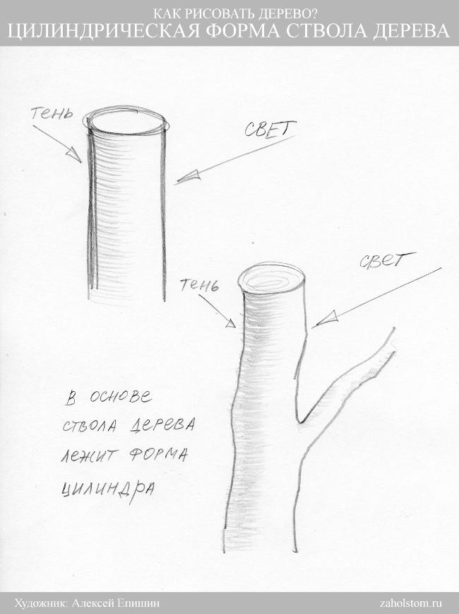 001 Как рисовать дерево. Цилиндр