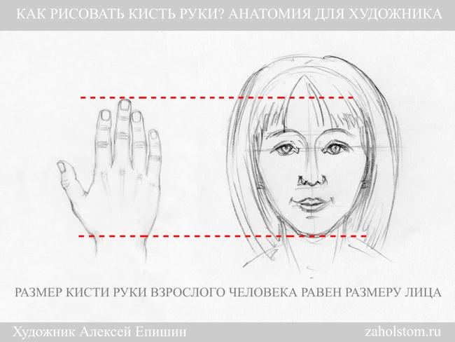 001 Как рисовать кисть руки. Анатомия для художника