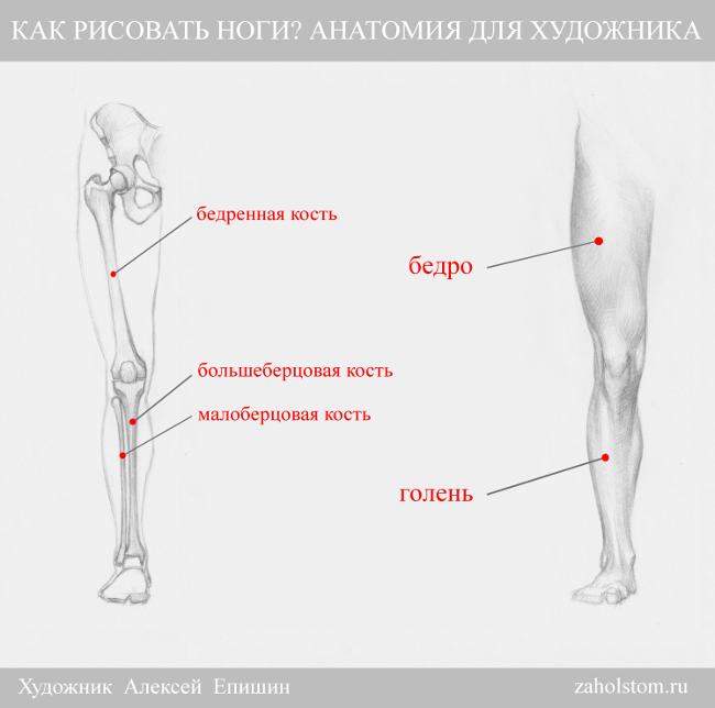 001 Как рисовать ноги_Анатомия для художника