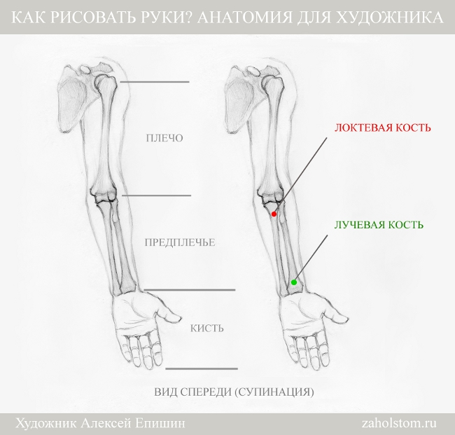 001 Как рисовать руки. Анатомия для художника