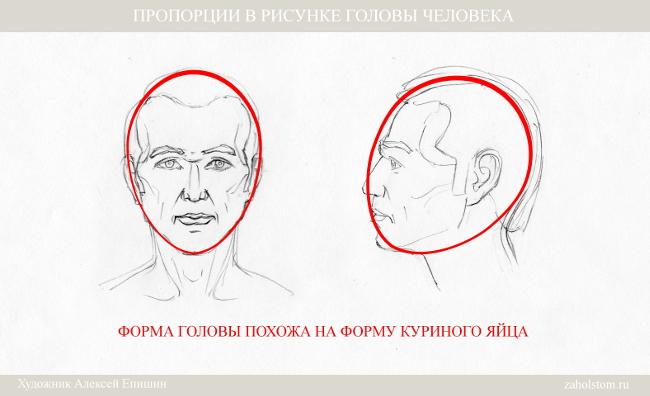 001 Пропорции в рисунке головы человека