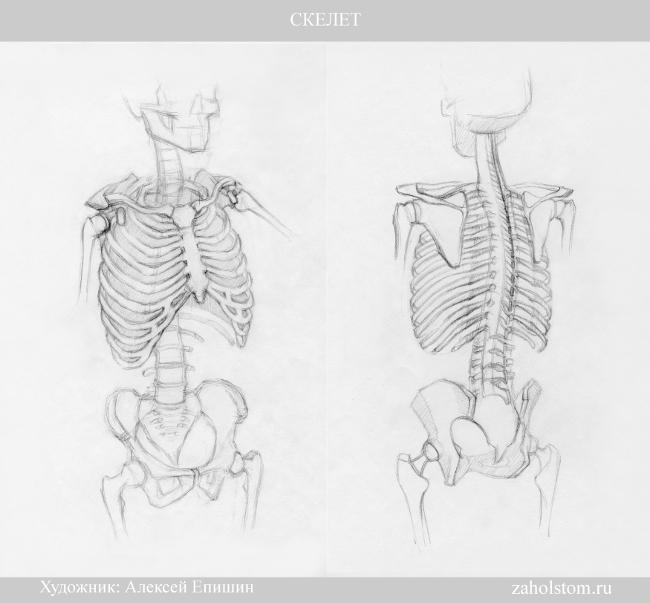 001 Скелет
