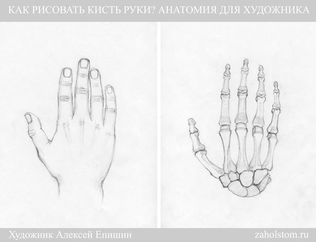 002а Как рисовать кисть руки. Анатомия для художника