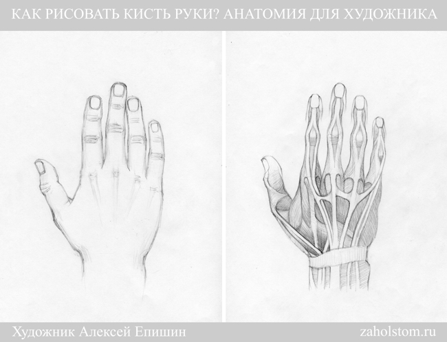 002б Как рисовать кисть руки. Анатомия для художника
