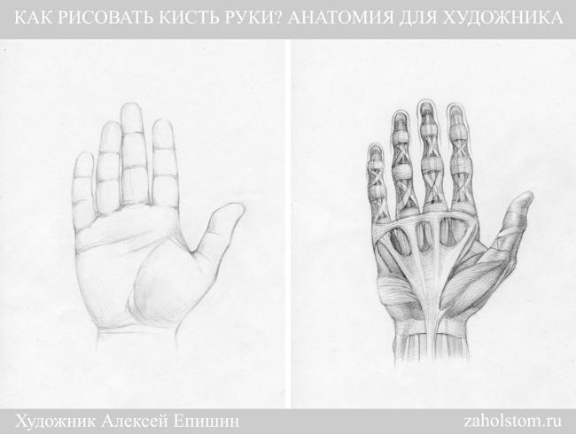 002в Как рисовать кисть руки. Анатомия для художника