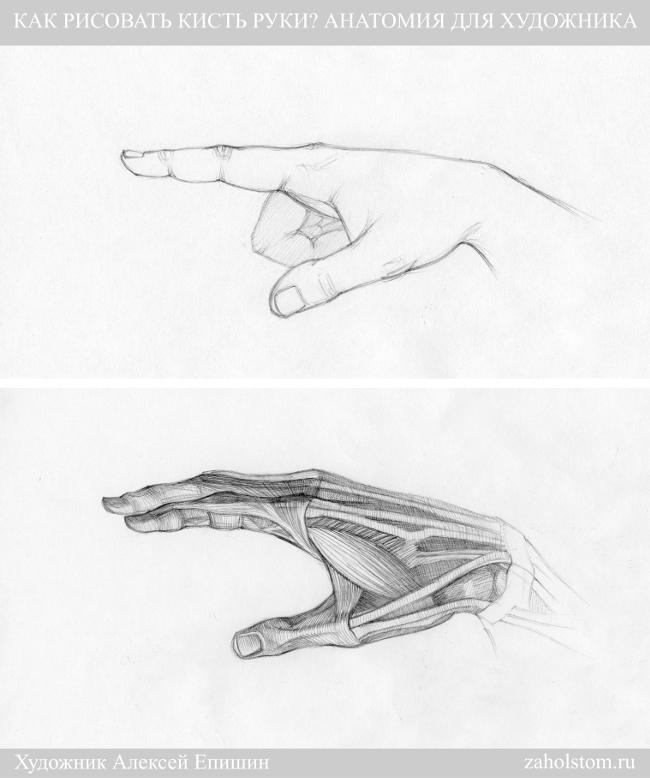 002г Как рисовать кисть руки. Анатомия для художника