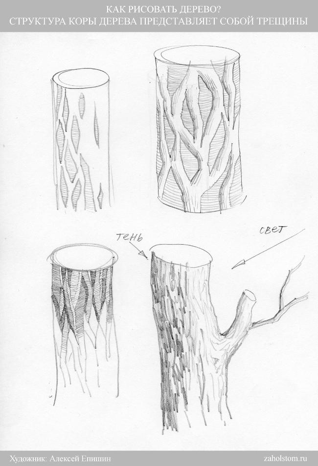 002 Как рисовать дерево. Кора