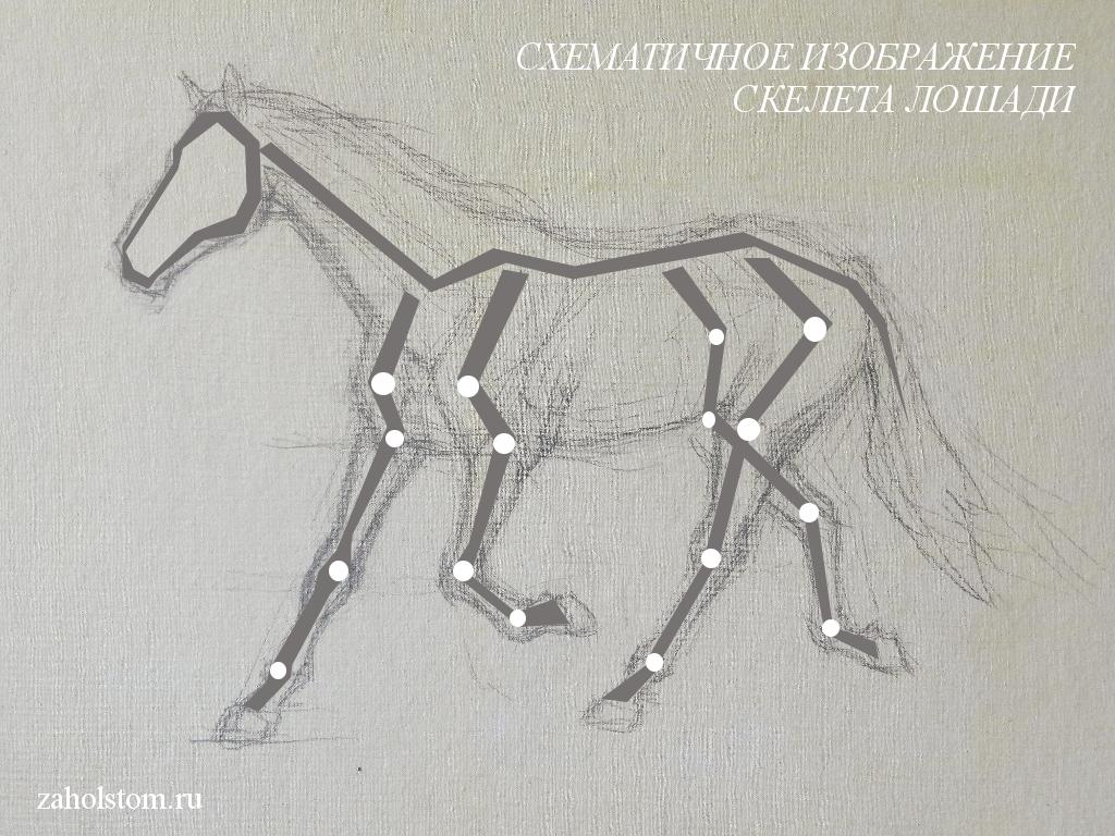 002 Как рисовать лошадь. Алексей Епишин