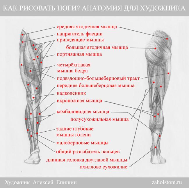 002 Как рисовать ноги_Анатомия для художника