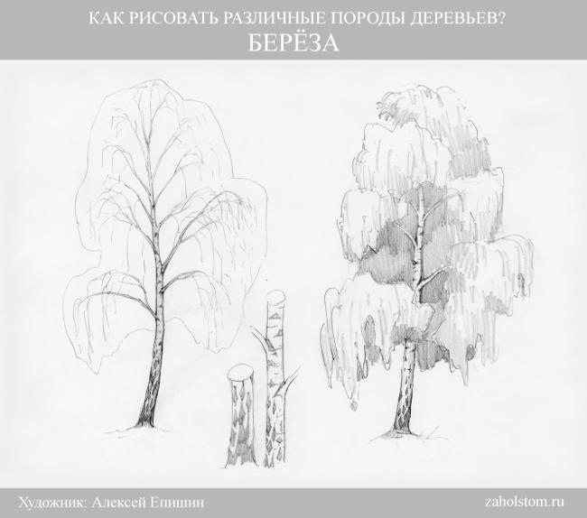 002 Как рисовать различные породы деревьев. Береза