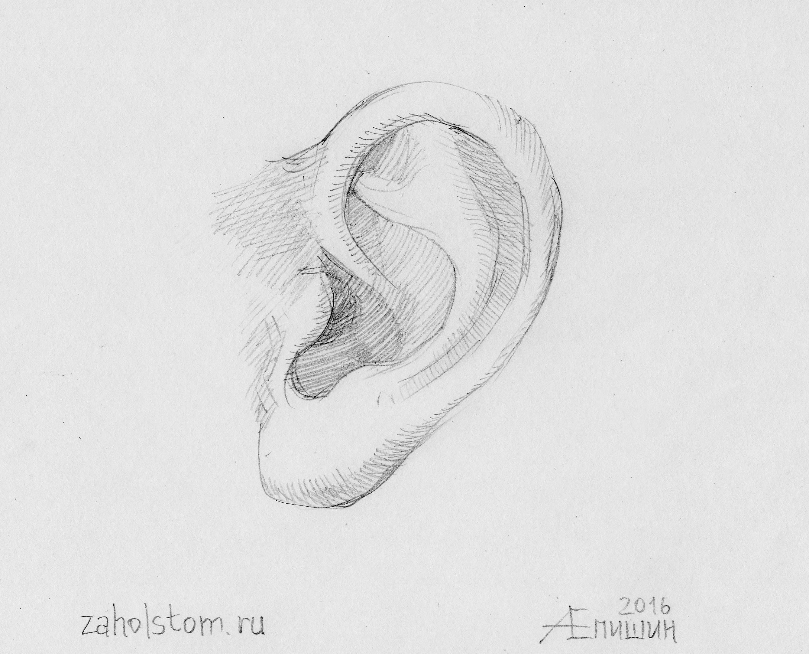002 Как рисовать ухо. Художник Алексей Епишин