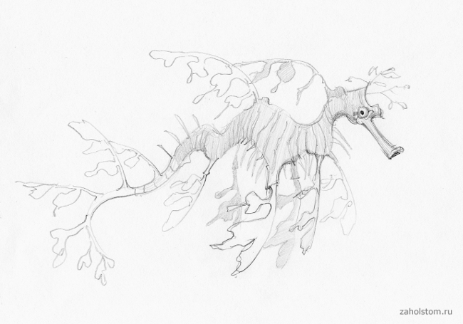 002 Фантастические формы на глубине океана
