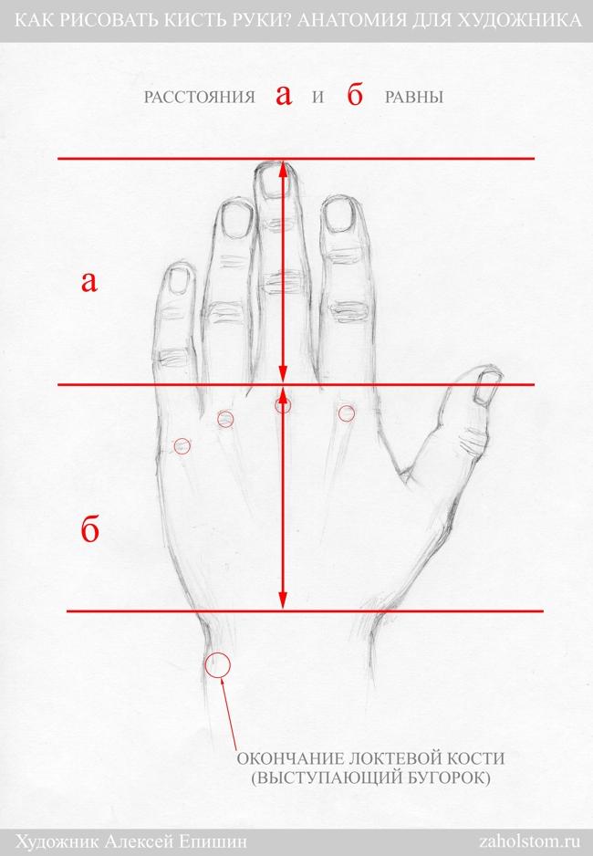 003 Как рисовать кисть руки. Анатомия для художника