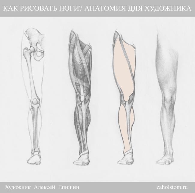 003 Как рисовать ноги_Анатомия для художника