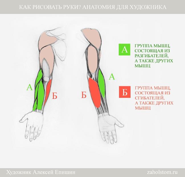 003 Как рисовать руки. Анатомия для художника