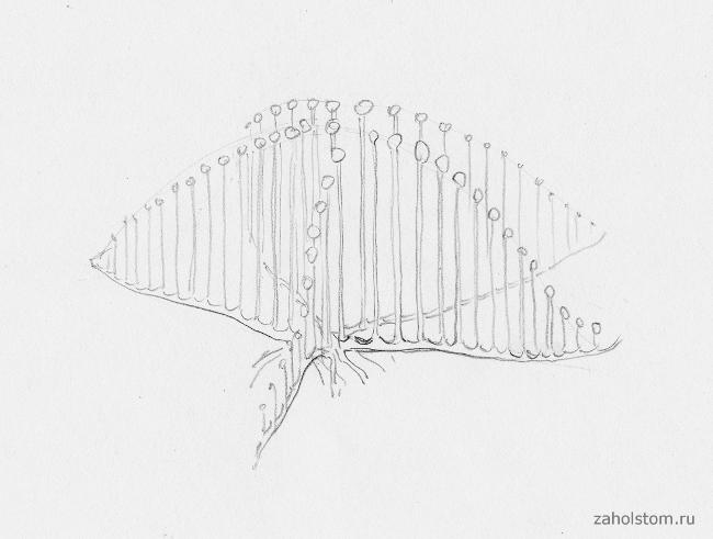 003 Фантастические формы на глубине океана