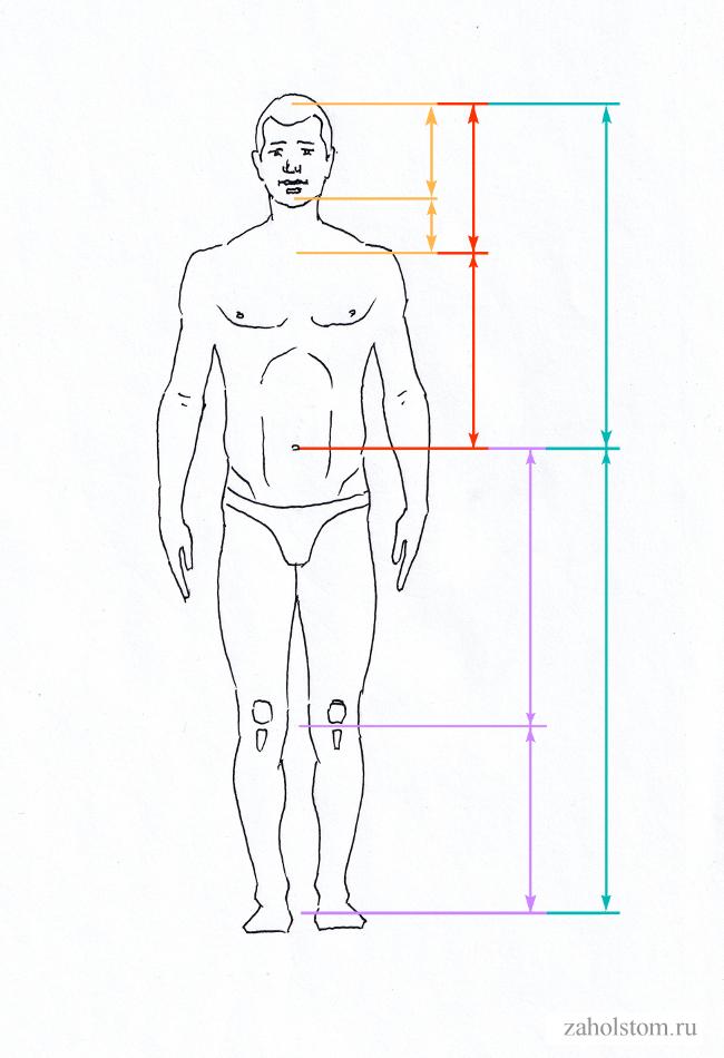 004 Загадка идеальной пропорции