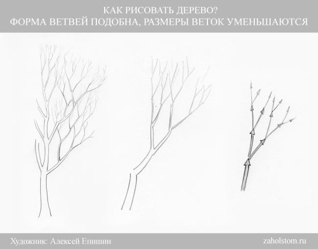 004 Как рисовать дерево. Размеры веток