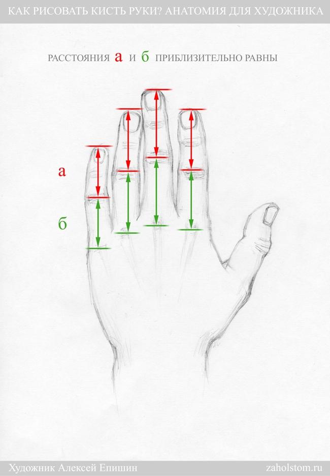 004 Как рисовать кисть руки. Анатомия для художника