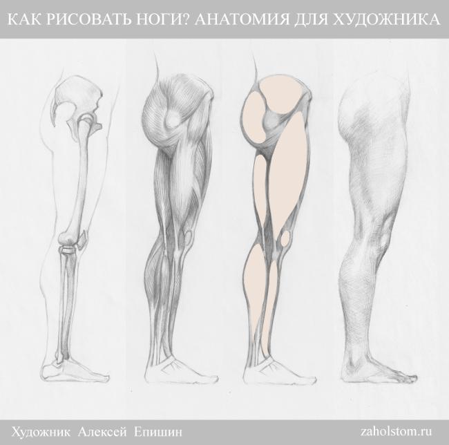 004 Как рисовать ноги_Анатомия для художника