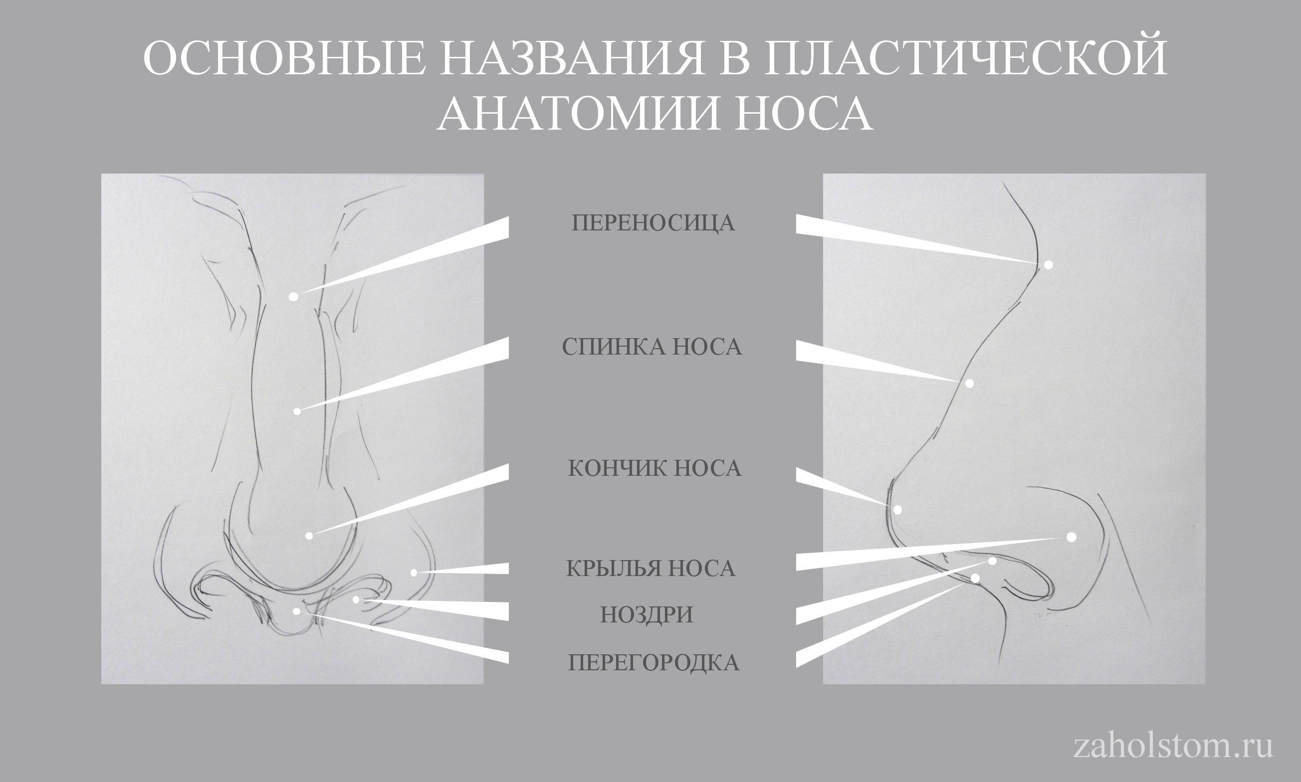 004 Как рисовать нос. Художник Алексей Епишин