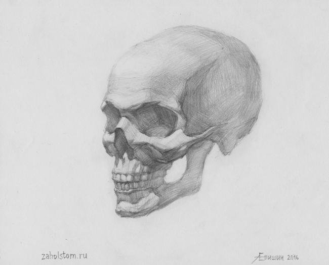 004 Как рисовать портрет. Учебный рисунок черепа