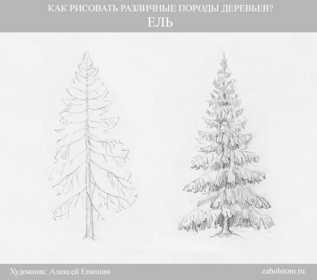 004 Как рисовать различные породы деревьев. Ель