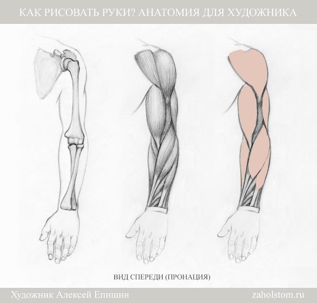 004 Как рисовать руки. Анатомия для художника