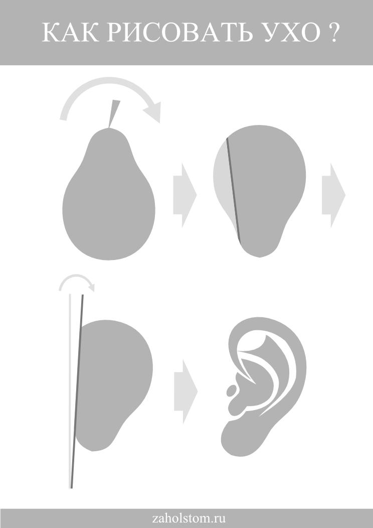 004 Как рисовать ухо. Простая схема. Художник Алексей Епишин