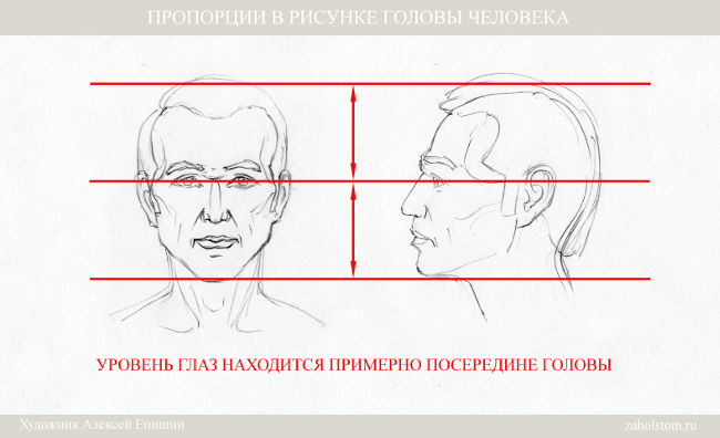 004 Пропорции в рисунке головы человека