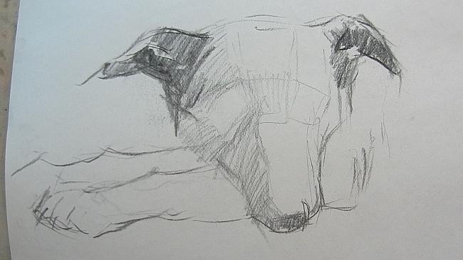 005 Взгляд молчаливого пса. Рисунок углем