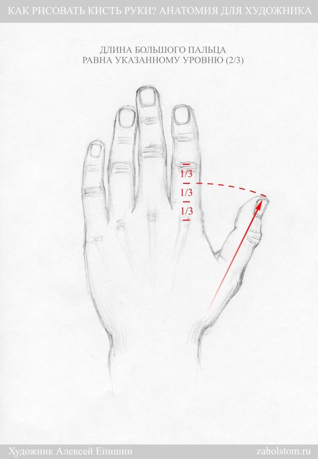 005 Как рисовать кисть руки. Анатомия для художника