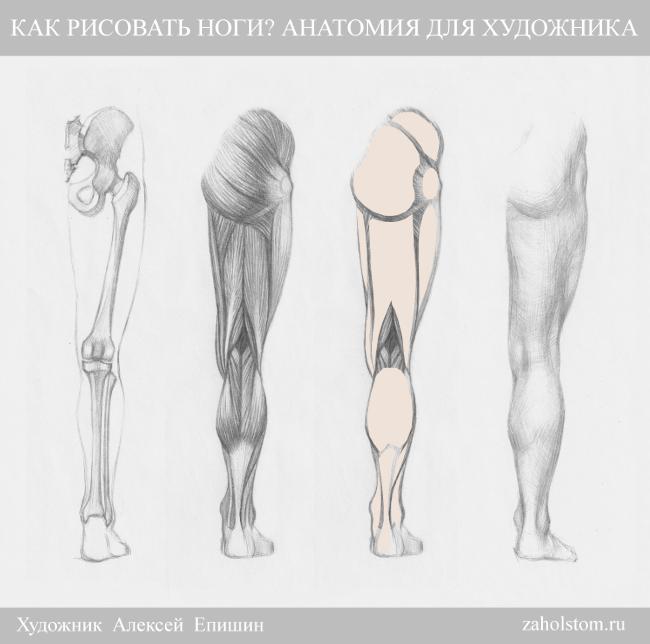005 Как рисовать ноги_Анатомия для художника
