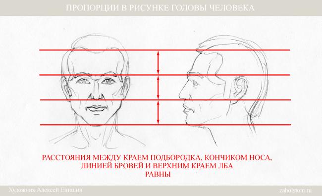 005 Пропорции в рисунке головы человека