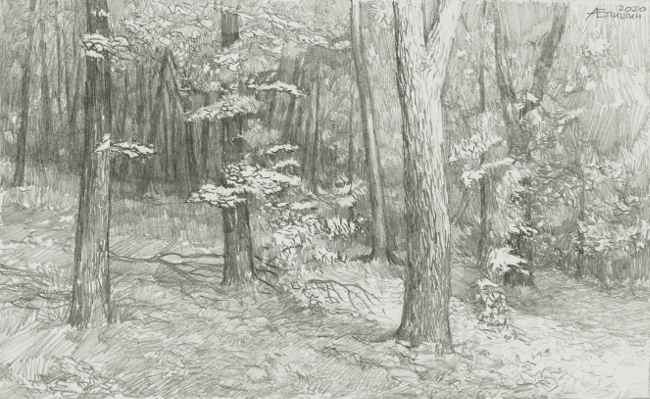 005 Рисунок карандашом_В лесу