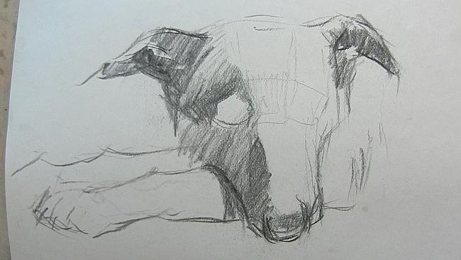 006 Взгляд молчаливого пса. Рисунок углем