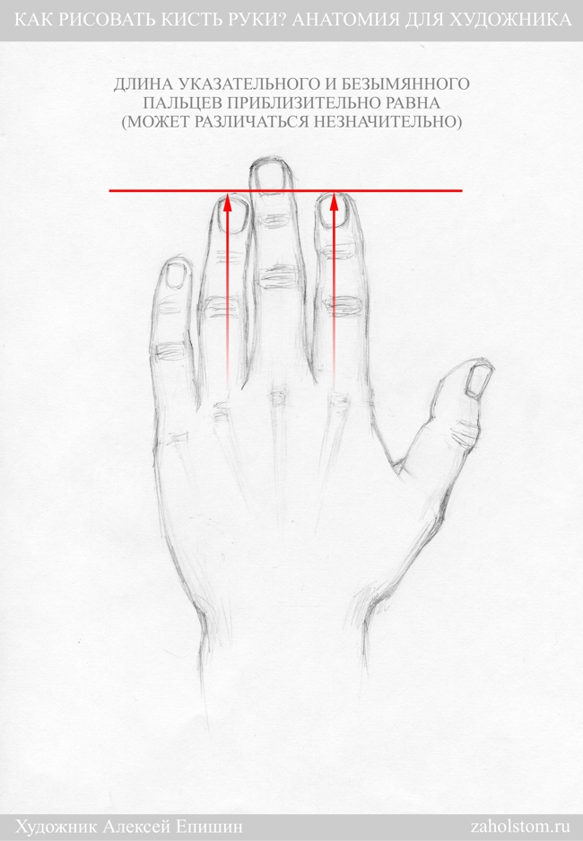 006 Как рисовать кисть руки. Анатомия для художника