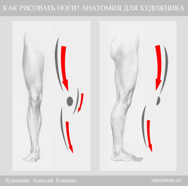 006 Как рисовать ноги_Анатомия для художника