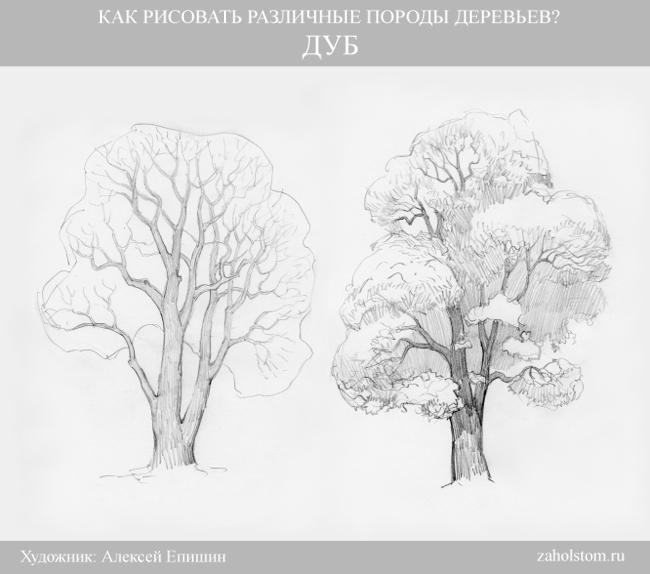 006 Как рисовать различные породы деревьев. Дуб
