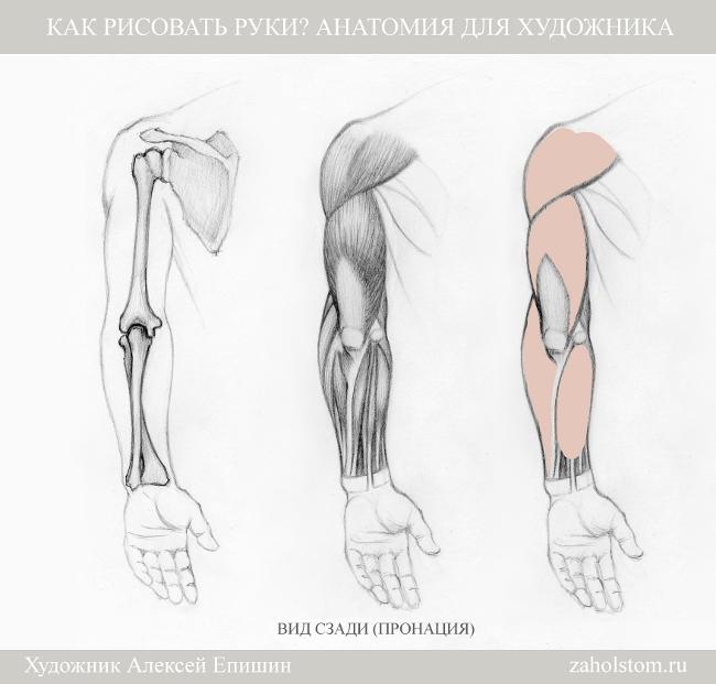 006 Как рисовать руки. Анатомия для художника