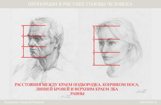 006 Пропорции в рисунке головы человека