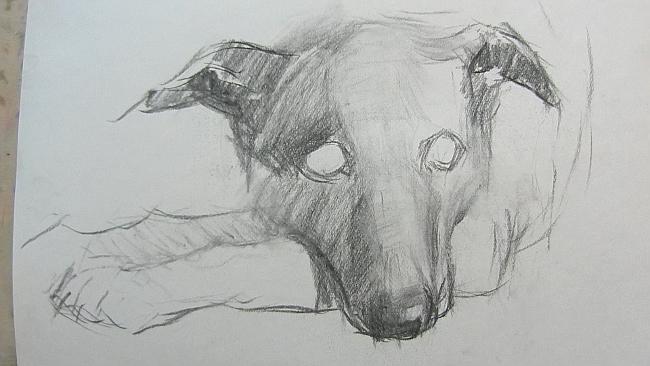 007 Взгляд молчаливого пса. Рисунок углем