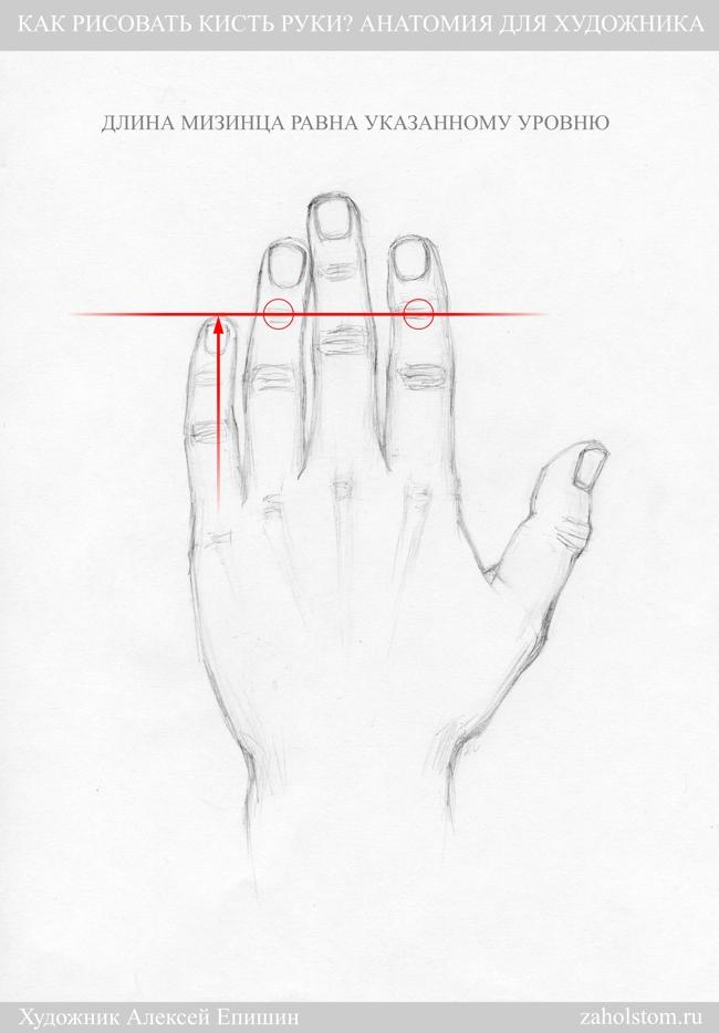 007 Как рисовать кисть руки. Анатомия для художника