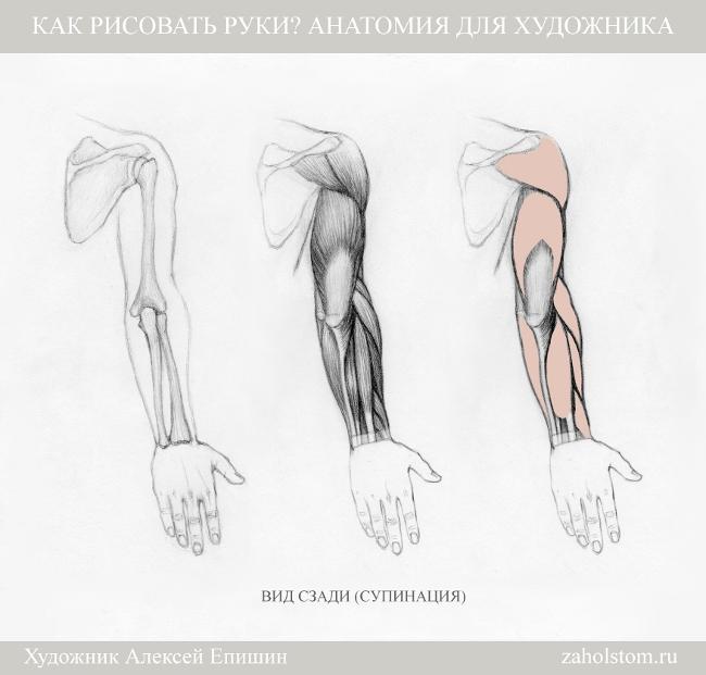 007 Как рисовать руки. Анатомия для художника