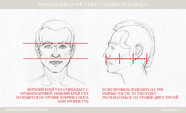 007 Пропорции в рисунке головы человека